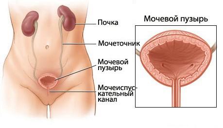 Болит мочевой пузырь у женщины лечение