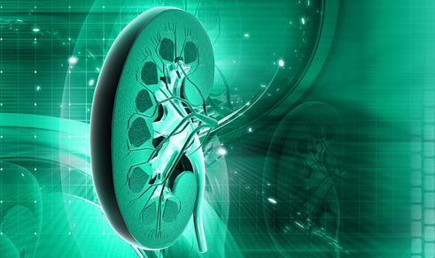 Почему развивается мочекаменная болезнь