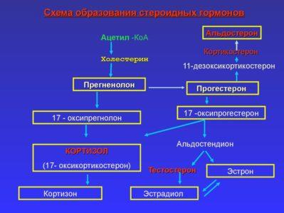 схема образования гормонов