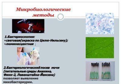 микробиологическое исследование