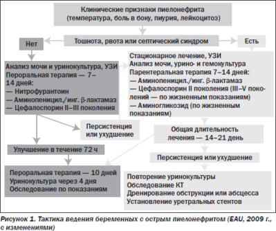 схема лечения пиелонефрита