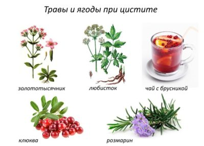 травы и ягоды при цистите
